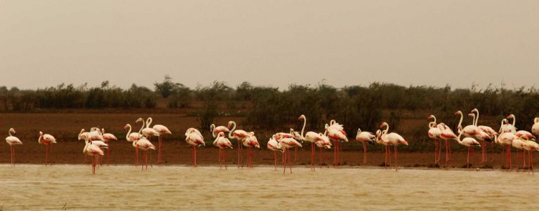 Flamingos in a nearby village